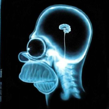 homer-simpson_brain